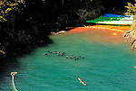 "Dolphins swim near ""killer cove"" in Taiji, Japan on 10 September  2009. At top left of the picture, between where the cliff meets the bloodied water and the yellow floats, is the discarded body -- floating upside down, of what appears to be a baby bottle nose dolphin..Photographer: Robert Gilhooly..."
