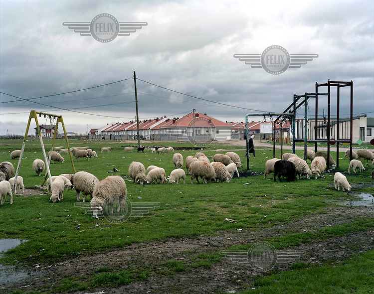 Sheep graze in a field near a new housing development built by the Ashkalli, an Albanian speaking  minority, some of whom choose to identify themselves as 'Egyptian' in order to distinguish themselves from the Roma.