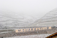 Sign with M Chapoutier. The Hermitage vineyards on the hill behind the city Tain-l'Hermitage, on the steep sloping hill, stone terraced. Sometimes spelled Ermitage. Vineyards under snow in seasonably exceptional weather in April 2005. Tain l'Hermitage, Drome, Drôme, France, Europe