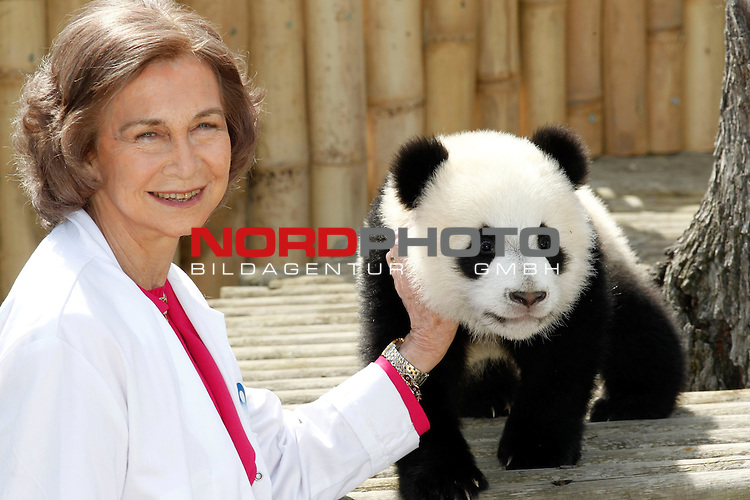 Spain's Queen Sofia plays with seven-months-old panda cubs Po and De De during her visit to Madrid's Zoo on March 29, 2011 in Madrid. The two pandas born on September 7, 2010 in Madrid, are the first giant panda twins to be born by artificial insemination outside China Foto © nph / Alex Cid-Fuentes