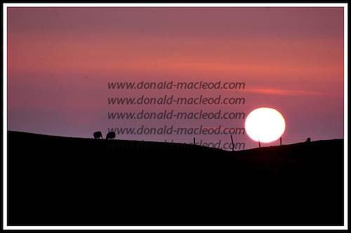 Sun and grazing sheep, Stilligary, South Uist .... Picture by Donald MacLeod