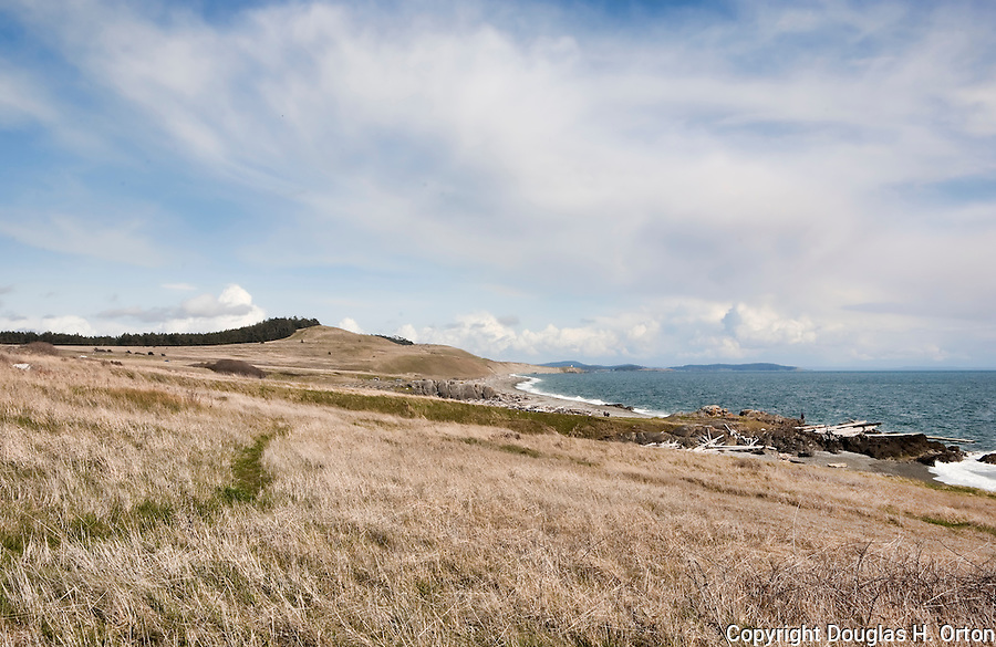 The American Camp Prarie is one of the last natural prarie areas in the San Juan Islands and the Puget Sound area.  This view runs south to South Beach and Cattle Point.