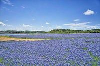 We captured many a field of bluebonnets in the Texas Hill Country. This was the best year so far.