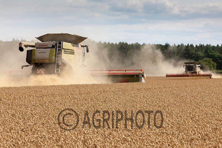Claas Lexion 780 harvesting wheat<br /> Picture Tim Scrivener 07850 303986