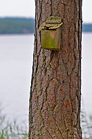 Bird's nesting house on a tree trunk. Lake in the background. The cracked face of a timber log. Smaland region. Sweden, Europe.