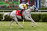 Dowse's Beach (no. 1) wins Race 2, Sep. 1, 2018 at the Saratoga Race Course, Saratoga Springs, NY.  Ridden by Irad Ortiz, Jr., and trained by Jason Servis, Dowse's Beach  finished 2 lengths in front of Royal Asset (no. 4).  (Bruce Dudek/Eclipse Sportswire)