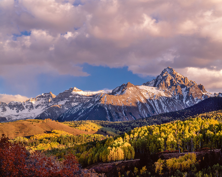 Sunset light on aspen groves in fall color below Mt. Sneffels in the San Juan Range; Uncompahgre National Forest, CO