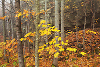 Rock formation and autumn forest