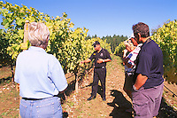 Vineyard Tour at Cherry Point Vineyards, during the Cowichan Valley Wine & Culinary Festival, on Vancouver Island, British Columbia, Canada