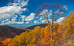 Shenandoah National Park, VA: Late fall color on the overlapping hillsides along Skyline Drive