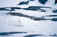 Arctic Hare sits on the snow covered rocky tundra, Churchill, Manitoba, Canada