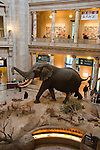 Smithsonian Museum of Natural History, Stuffed African elephant in lobby, Washington, DC, dc124467