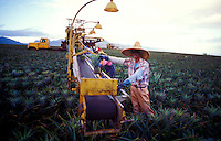 Pineapple workers and harvesting machine in the Dole pineapple fields in Wahiawa, Island of Oahu
