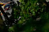 IMSA WeatherTech SportsCar Championship<br /> Continental Tire Road Race Showcase<br /> Road America, Elkhart Lake, WI USA<br /> Saturday 5 August 2017<br /> 86, Acura, Acura NSX, GTD, Oswaldo Negri Jr., Jeff Segal<br /> World Copyright: Richard Dole<br /> LAT Images