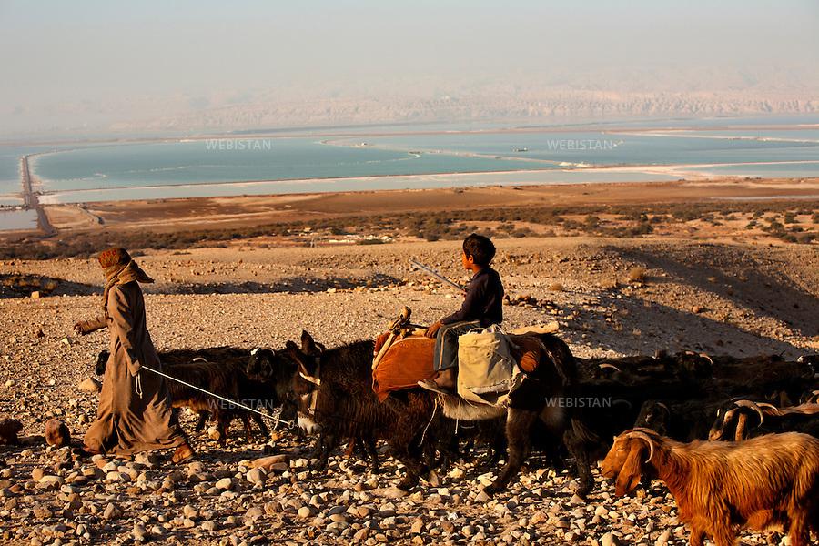 JORDAN, NUMEIRA, January 3rd, 2008.<br /> 14 km south from Bab edh-Dhra, Numeira is an archaeological site, supposedly the site of Gomorrah, a huge city on the top of the hill, destroyed by God, like Sodom.<br /> Flock of sheep belonging to the Bedouins, close to the factories exploiting minerals such as potassium, magnesium or bromine from the Dead Sea. <br /> <br />JORDANIE, SITE DE NUMEIRA, 3 janvier 2008<br /> A 14 km au Sud de Bab Edh Dhra, Numeira, le site suppos&eacute; de Gomorrhe, &eacute;tait une grande ville au sommet d'une colline, d&eacute;truite par Dieu en m&ecirc;me temps que Sodome.<br /> Troupeau de b&ecirc;tes appartenant aux b&eacute;douins install&eacute;s &agrave; c&ocirc;t&eacute; des usines exploitant les mineraux tels que la potasse, le magn&eacute;sium ou le brome, issus de la Mer Morte.