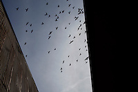 CREDIT: Daryl Peveto/LUCEO for The Wall Street Journal.Exports 2032..Los Angeles, California, March 1, 2010 - Birds fly overhead in search of food at the Los Angeles Harbor Grain Terminal.  The company, which was started in 1958, transfers grain products from trailers and boxcars into shipping containers. A decline in U.S. consumption has left exports short of a good exit strategy. In 2009, imports fell 28%. This has created a bottleneck for exports, which need the shipping containers to move product overseas.....