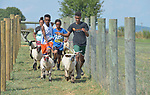 Resettled refugee youth run with sheep in Linville, Virginia, on July 17, 2017. The youth are preparing to show sheep and goats in a county fair. <br /> <br /> The refugees were resettled in the Harrisonburg, Virginia, area by Church World Service. <br /> <br /> Photo by Paul Jeffrey for Church World Service.