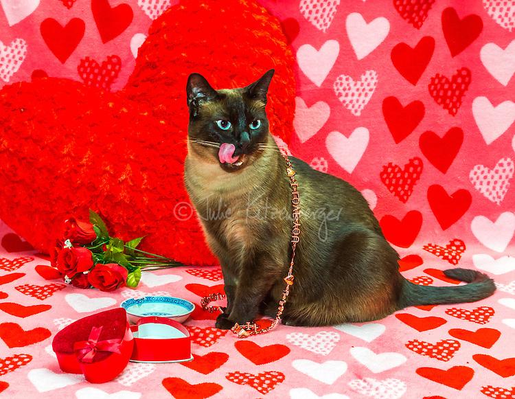 2015-02-07_CATS_COCO Valentines