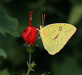 Flower and Butterfly. photo by jane therese