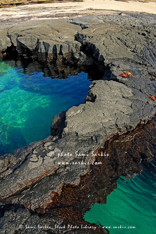 Pool of transparent waters and volcanic rocks with Sally Lightfoot Crabs (Grapsus grapsus) at Punta Vincente Roca, Isabella Island, Galapagos archipelago, Ecuador