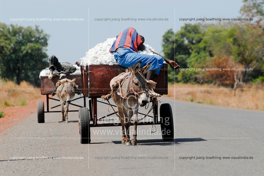 MALI, Bougouni ,Two sleeping farmer transport cotton from field with donkey cart / MALI , Bougouni, schlafende Bauern transportieren Baumwolle mit Eselkarren