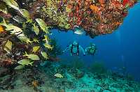 Scuba Divers <br />