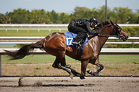 #17Fasig-Tipton Florida Sale,Under Tack Show. Palm Meadows Florida 03-23-2012 Arron Haggart/Eclipse Sportswire.