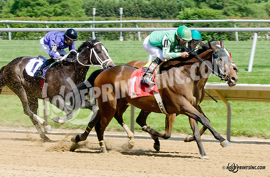 Señor Quickie winning at Delaware Park racetrack on 5/31/14