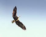 Eagles*