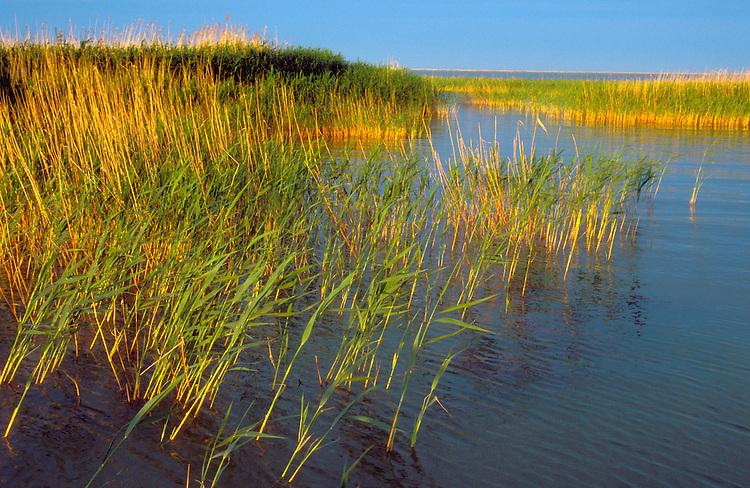Steppe Lake, Kazakhstan