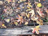 Tallman Park, October, 2011