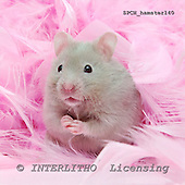 Xavier, ANIMALS, photos+++++,SPCHHAMSTER140,#a# ,funny