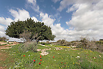 Israel, the Shephelah. Site of Hurbat Midras, a settlement from the kings of Judah period