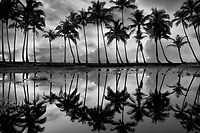 Palm trees reflecting in pond with sunrise. Punaluu Black Sand Beach. Hawaii Island
