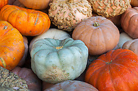 Heirloom pumpkins for sale in a market in New York on Wednesday, October 12, 2016. (© Richard B. Levine)