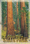 Calaveras Big Trees S.P., CA.  4x6 postcards by Frank Balthis