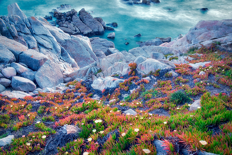 Ice plant in bloom and ocean. 17 Mile Drive. Pebble Beach, California