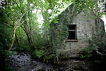 Ireland - Woodlands, Flora, Fauna + Old Rural Buildings