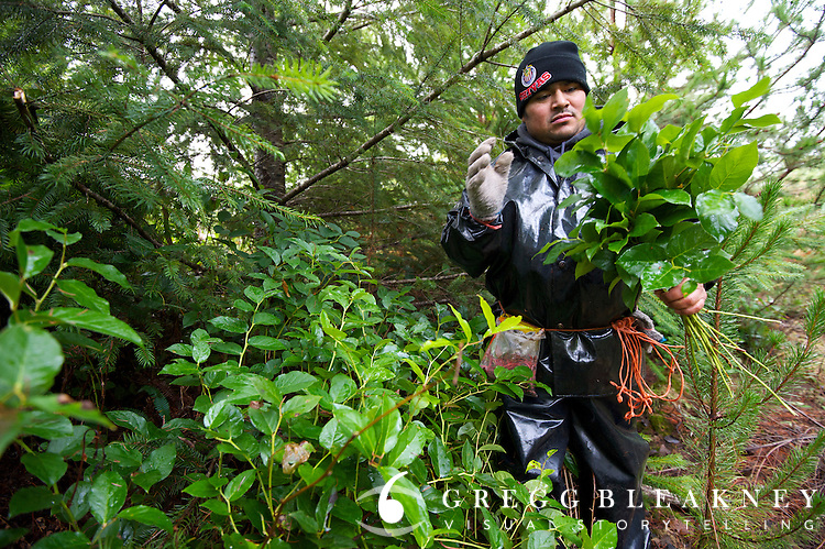 "A licensed salal picker from Oaxaca, Mexico on the Olympic Peninsula. He works 8-10 hours per day and is paid ""very, very, little"" for his efforts."