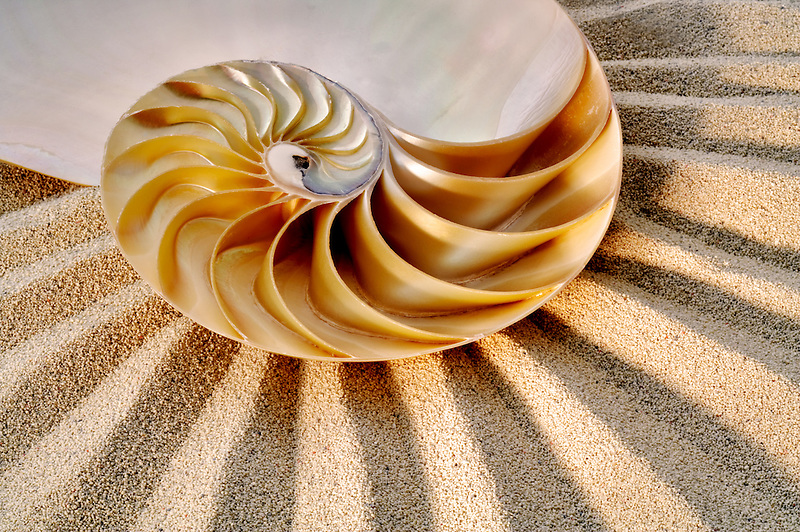 Nautilus sea shell.
