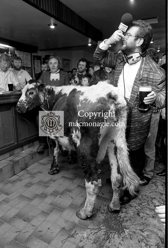 1992 The Blackwater Taverm (owner Teddy O'Neill) Direendraugh, Blackwater, Sneem, County Kerry Ireland 1992:  The Gay Byrne Radio Show, (Ireland's most listened to show) celebrated 'Big Bertha', reaching 48 years of age and appearing in the Guinness Book of Records as the world's oldest cow. In this photograph show Joe Duffy who worked on the show in pub pub as it broadcast live on air in 1992. Bertha left her 'mark' on the floor during the transmission.<br /> Big Bertha died on New Year's Eve 1993.<br /> Photo: Don MacMonagle <br /> e: info@macmonagle.com