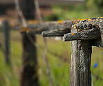 Old wood fence in the Palouse Valley with colorful lichen growing on the wood