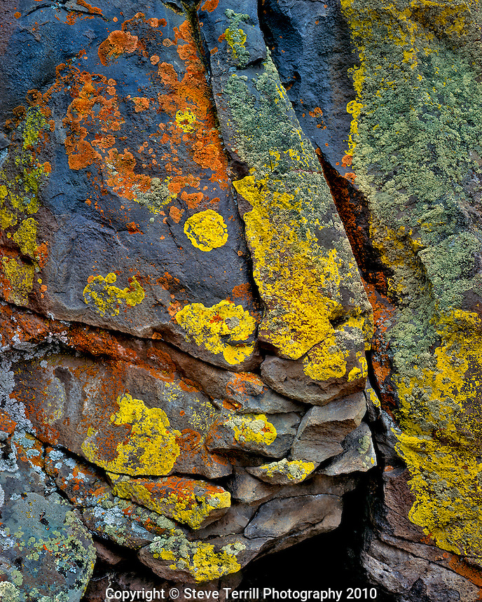 Lichen covered basalt on Antler Ridge in Deschutes National Forest Oregon