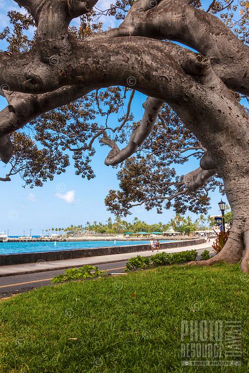 A big tree frames distant visitors strolling along Ali'i Drive, Kailua-Kona, Big Island.