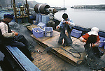 A family untangles seafood caught in the Strait of Tsugaru from their nets in the port town of Omma, on the Northern most tip of Honshu, Japan. (Jim Bryant Photo)