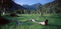 February 29th 2004-Behau, Timor-Leste-Lush green grass and Eucalyptus trees are bathed in the light of the early morning sun in this valley near the Behau area of Manatuto District.  Photograph by Daniel J. Groshong/Tayo Photo Group