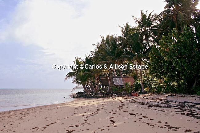 Beach & Palms