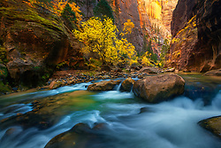 The North Fork of the Virgin River cuts through a deep sandstone canyon, complemented by golden light and colorful fall foliage. <br />