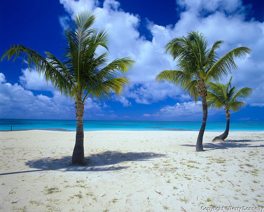 Barbuda, West Indies: Palm trees on a deserted section of Coco Point Beach - caribbean Leeward Islands