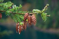 North Cascades National Park, Washington, US